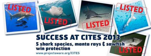 CITES victory for sharks and rays banner